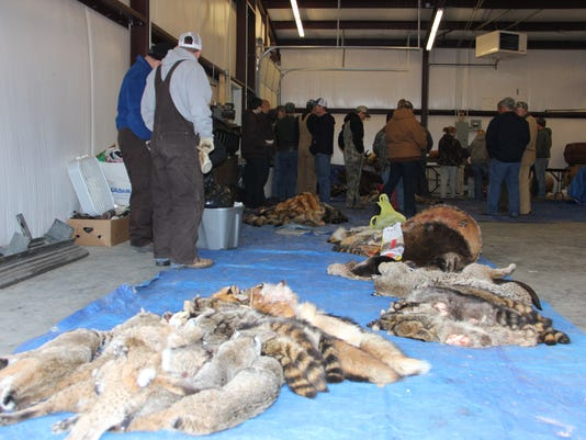 Bradleyville fur sale 060.JPG