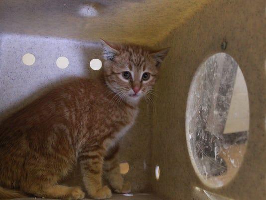 STG1219 dvt rescued cat