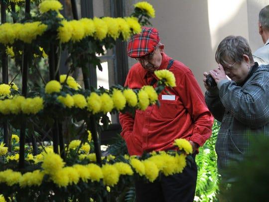 102714 Chrysanthemum display jc0074.jpg