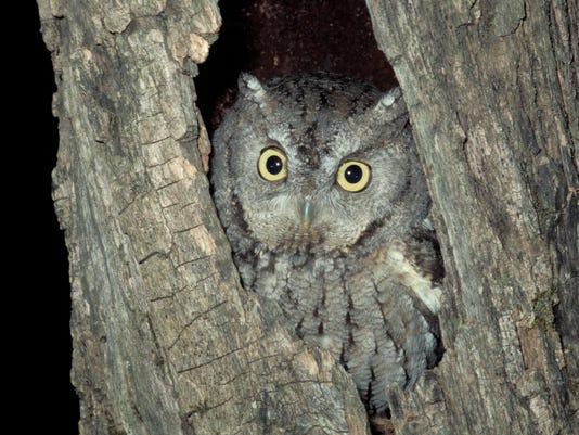 new owl4.jpg