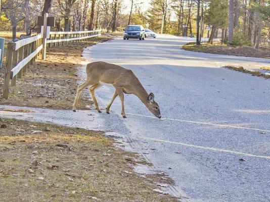 Deer crossing (1).jpg