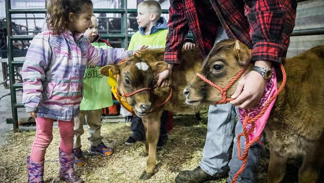 Attendees meet calves during the Delaware County Farm Festival at the Fairgrounds Tuesday morning.