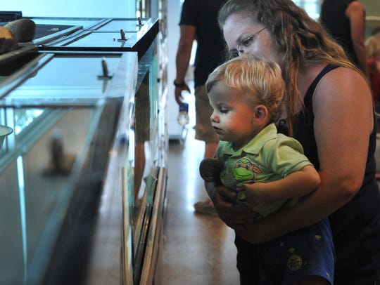 Isaiah Wells, 22 months old, and his mom, Audra, look at turtles inside of an aquarium Thursday during the River Bend Nature Center's Turtle Time.