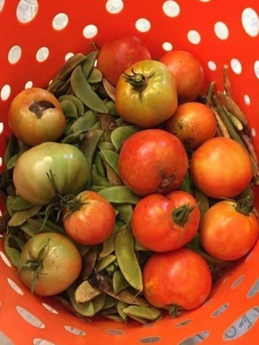 636620779283835797-Buchan-5-tomatoes-crop.jpeg