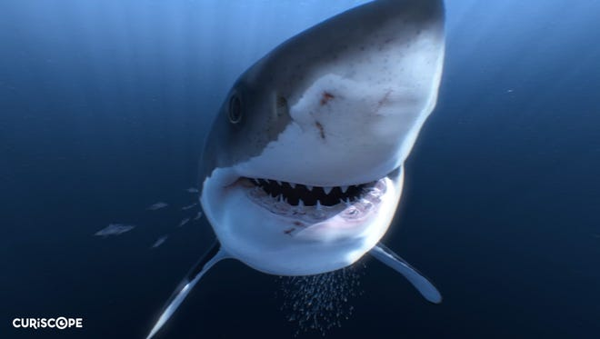 London-based Curiscope recently released a new virtual realty film that gives viewers a 360-degree view of a computer-generated shark swimming in the ocean.