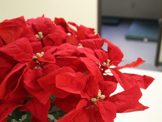A poinsettia plant sits on one of the cafeteria tables