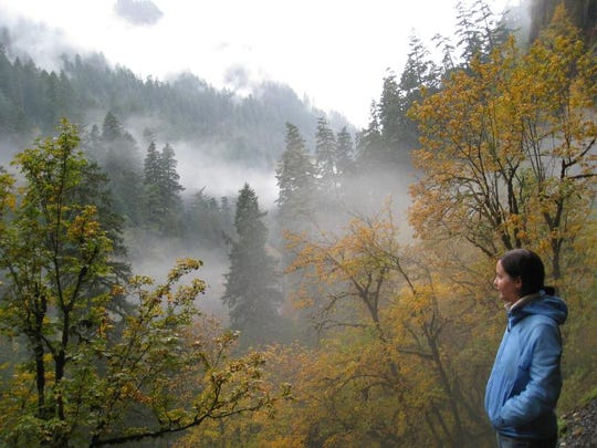 A hiker takes in the mist-shrouded fall colors in Eagle Creek Canyon in the Columbia Gorge.