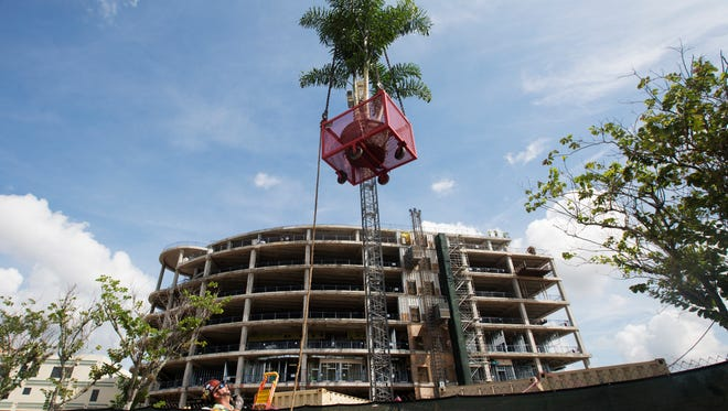A fox tail palm tree is hoisted to the top of the Golisano Children's Hospital of Southwest Florida during a topping off ceremony for local dignitaries and employees.