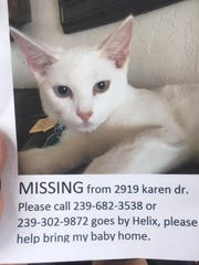 Do you know me? I am missing from Karen Drive.