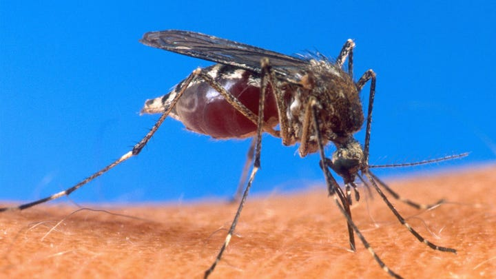 How to be protected with mosquito-borne diseases on the rise