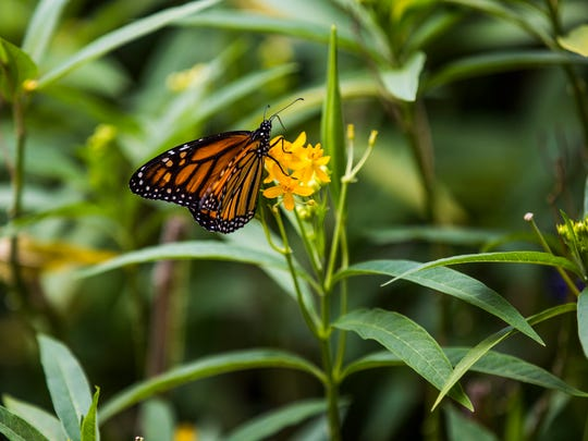 The Naples chapter of the Florida Native Plant Society will host a presentation Tuesday about butterfly gardening in Southwest Florida.