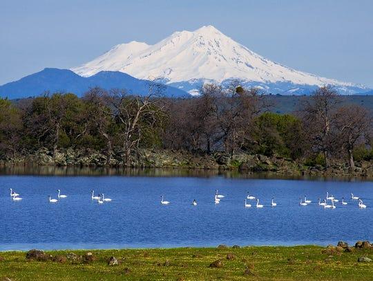 Mt. Shasta is one of eight hazardous volcanic areas