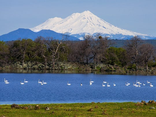 Mt. Shasta is one of eight hazardous volcanic areas up and down the state, according to a new study. Snow-capped Mt. Shasta, California's most iconic volcano, towers over the landscape in far Northern California.