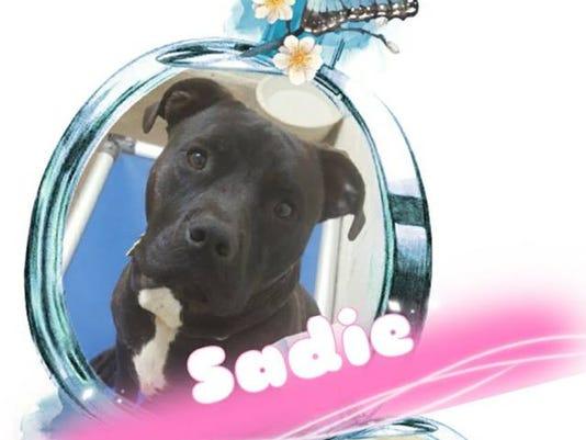 636372881933994211-Sadie.jpg