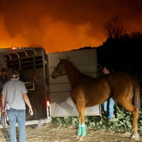 California fires killed several racehorses and put trainer in coma