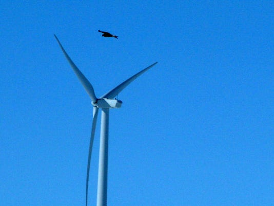 wind power eagles