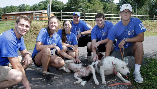 Luke Newman, Taylor Price, Paige Lentz, Karen Traub, Thomas Paul and Brian Siket all  incoming freshman in the Misericordia University Class of 2021, helped at Blue Chip Animal Rescue Farm in FranklinTownship walking dogs and other activities.