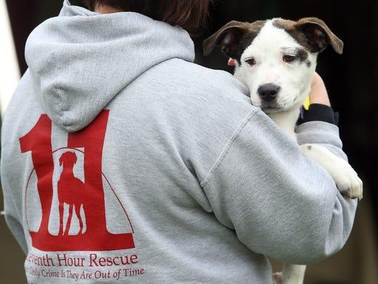 Eleventh Hour Rescue dog