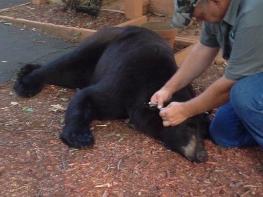 bear3.jpeg