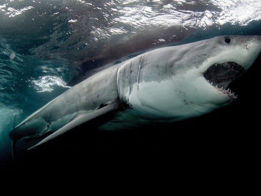 -ASBBrd_08-10-2014_PressMon_1_U008~~2014~08~07~IMG_XXX-shark-week-under_1_1_.jpg