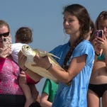 Seven sea turtles hooked at Navarre Beach returned to Gulf of Mexico