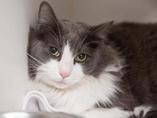 Kanku is available at the Arizona Humane Society's Sunnyslope Campus at 9226 N. 13th Avenue in Phoenix. For more information, call 602-997-7585 and ask for animal number 582296.