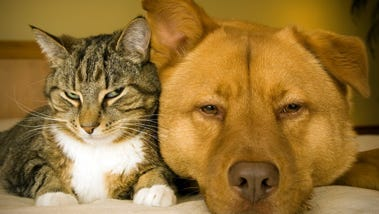 Plenty of adoptable pets are available at the shelter operated by the Humane Society of Lincoln County in Ruidoso.