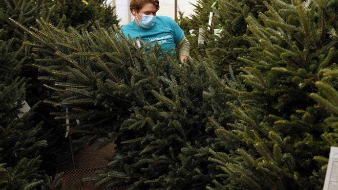 Patrick Barry, of Cofer's Home & Garden Showplace, grabs a Christmas tree for a customer's car in Athens, Ga., on Wednesday, Nov. 25, 2020.