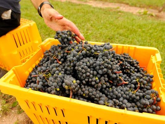 -MAN n Grape Harvest 02.jpg_20131004.jpg