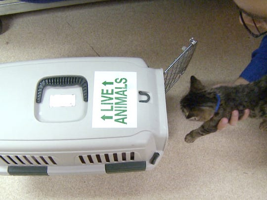 Owners should make sure that an animal's crate is properly labeled and secured and the pet is wearing two identification tags that include the owner's name, address and phone number.
