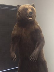 Scott Barry, CEO of Centria Healthcare, keeps a taxidermized bear he killed on an Alaskan hunting trip in his office.