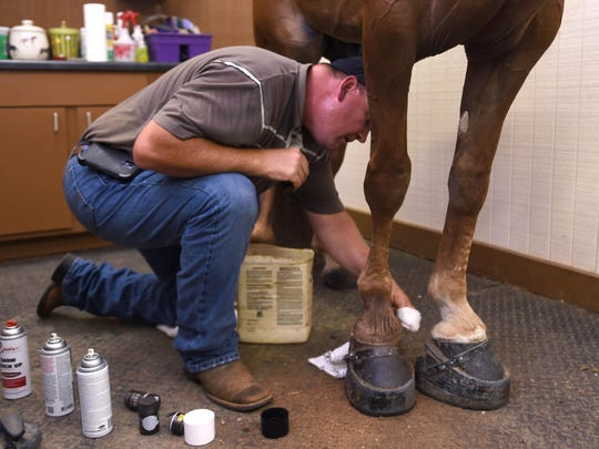 Horse trainer Carl Bledsoe demonstrates how to cover