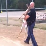 Police officer Ryan Bruggink carries a trapped deer off a softball field.