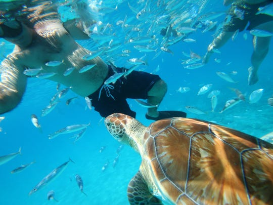 No Caribbean vacation is complete without some snorkeling, and the artificial reef at the Folkestone Marine Park & Museum is a great option.
