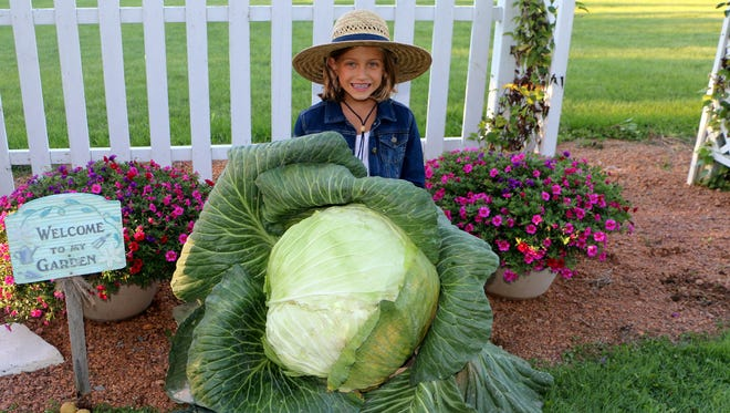 Sydney Sperl is the Wisconsin state winner in the Bonnie Plants Third Grade Cabbage Program. Sperl's winning cabbage weighed more than 35 pounds.