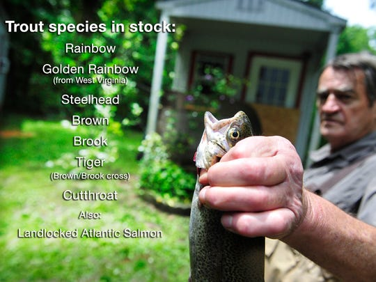 A list of the available fish species at Bob White Springs Trout Farm.