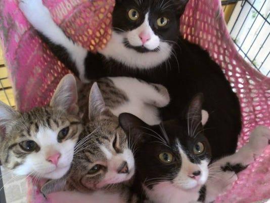 DFP How cats communi (2).JPG