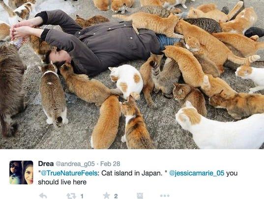 Cat Island Tour