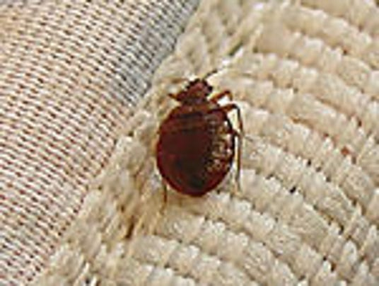 What To Do When Your Friend Has Bed Bugs
