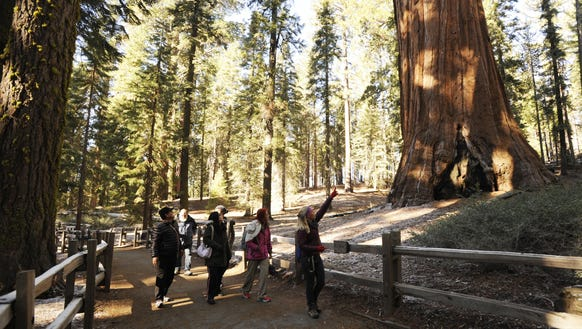 A group in Sequoia National Forest visits the General
