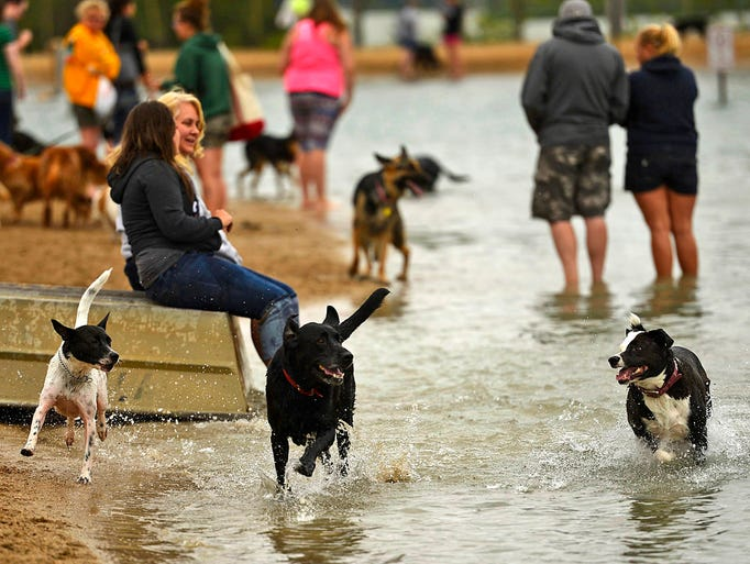 Dogs race around the beach during the Doggie Dip at Ashwaubomay Lake in Ashwaubenon on Sunday, Aug. 17, 2014. A portion of the proceeds benefit the Bay Area Humane Society. Evan Siegle/Press-Gazette Media