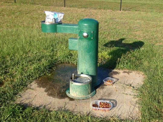 Residents concerned about the welfare of a seemingly abandoned dog at Lexington Terrace dog park left food for the animal Tuesday.