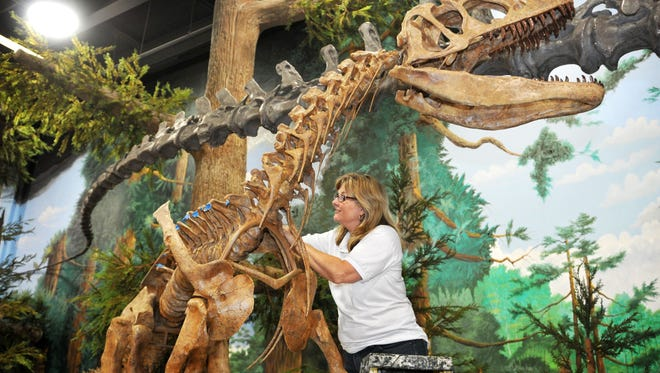 Donna Cayer, Director-Education, at work trying to attach a rib to an Allosaurus display in the Museum of Dinosaurs and Ancient Cultures is under construction on the second and third floors above the Dinosaur Store, at 250 W. Cocoa Beach causeway in Cocoa Beach.This non-profit attraction is planned for a Summer of 2015 opening.