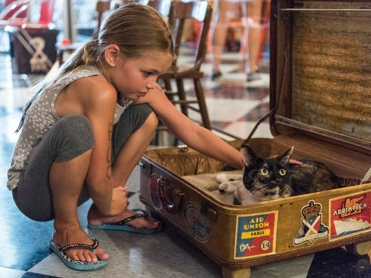 Emmi Schiff, 7, pets a cat named Riley during a soft opening of the River Kitty Cat Cafe, located along Main Street, in downtown Evansville, Ind., on Thursday, July 13, 2017.