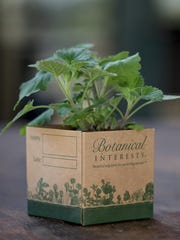 Recycled Paperboard Pots from Botanical Interests offer an eco-friendly way to grow seedlings.