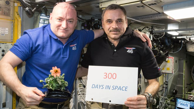 In this Jan. 21, 2016 photo made available by NASA, one-year mission crew members Scott Kelly of NASA, left, and Mikhail Kornienko of Roscosmos celebrate their 300th consecutive day in space. By spending 340 days aboard the International Space Station, the astronauts will help scientists understand what happens to the human body while in microgravity for extreme lengths of time. Kelly is holding a zinnia plant grown in space as part of the Veggie experiment on the International Space Station.