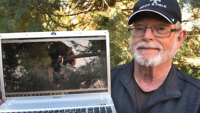 West Reno resident Bill Oriel, shows a photo that he took of one of the bears that his visited his home in recent weeks. Oriel said he's had eight different bears at his woodsy home located near the Truckee River.
