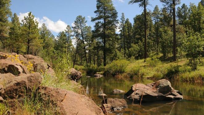 Billy Creek along the Blue Ridge Trail in Pinetop-Lakeside.
