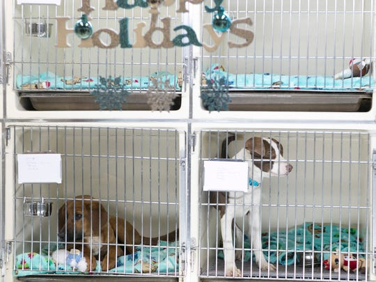 Rescue dogs for adoption at Eleventh Hour Rescue. Grand opening of Eleventh Hour RescueÕs Kennel on Black Friday in the Rockaway Mall next to Sears, Rockaway, NJ. Friday, Nov. 27, 2015.