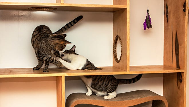 Rescue cats play with each other at the new Meow Parlour in the Lower East Side of Manhattan.
